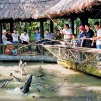 Câu cá sấu